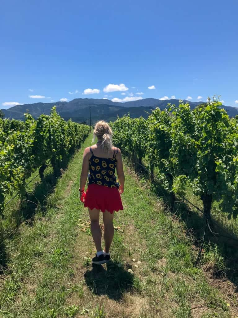 A photo of me walking through a stunning marlborough vineyard